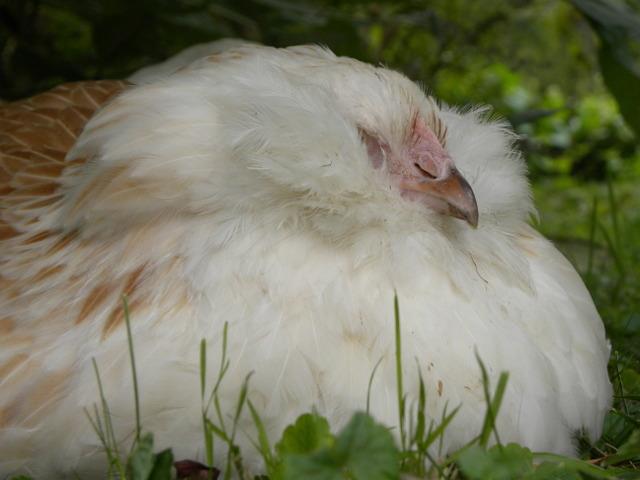 poulette qui fait un petit somme