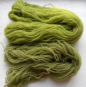 Verts surprenants avec la gaude
