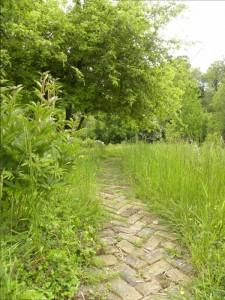 Sentier dans les hautes herbes