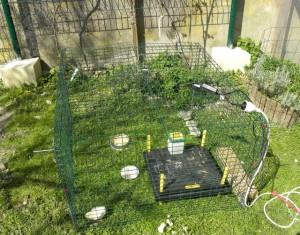 Installation des poussins dehors