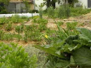 Le jardin et la paille.