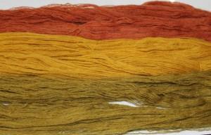 Les couleurs de la rhubarbe