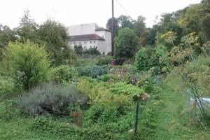 Le jardin à l'automne.