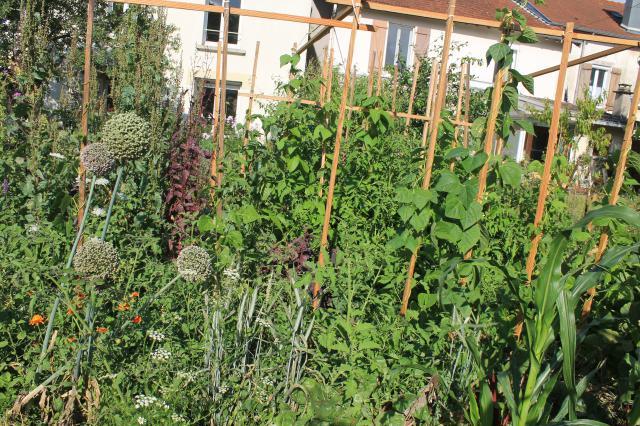 Jardin blog tricofolk for Jardin potager 2015