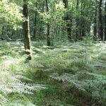 La forêt toute proche