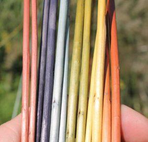 De gauche à droite : garance, noix de galles + sulfate de fer, indigo, indigo et bourdaine, bourdaine, bourdaine en pH basique